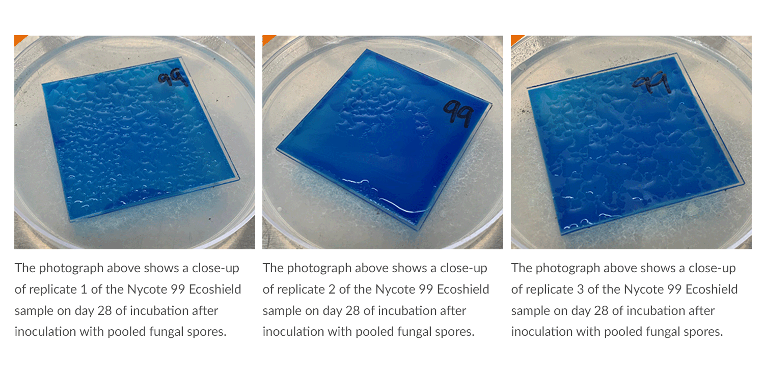 Nycote 99 Ecoshield on day 28 of the fungal resistance Nycote case study